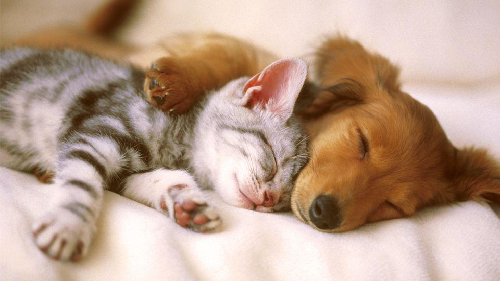 Resultado de imagen para perro y gato