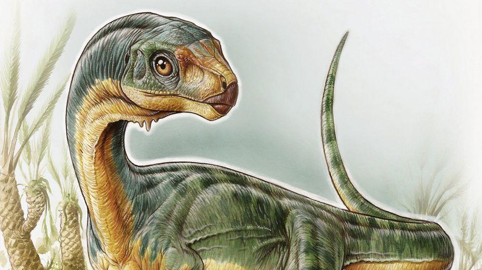 Descubierto un raro dinosaurio «ornitorrinco»