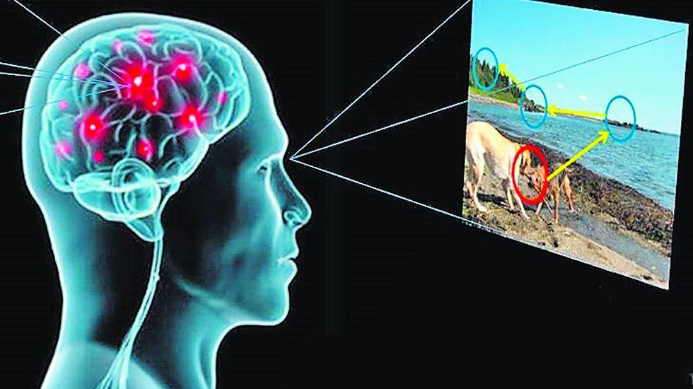 Un equipo gallego crea un modelo de atención visual que imita al ojo