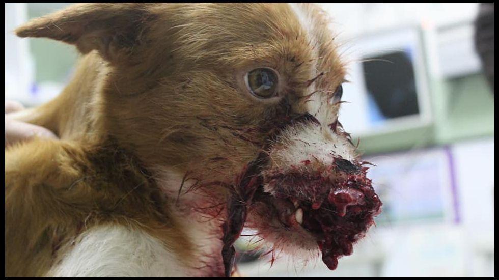 el seprona investiga la muerte a tiros de una perra de caza en verín