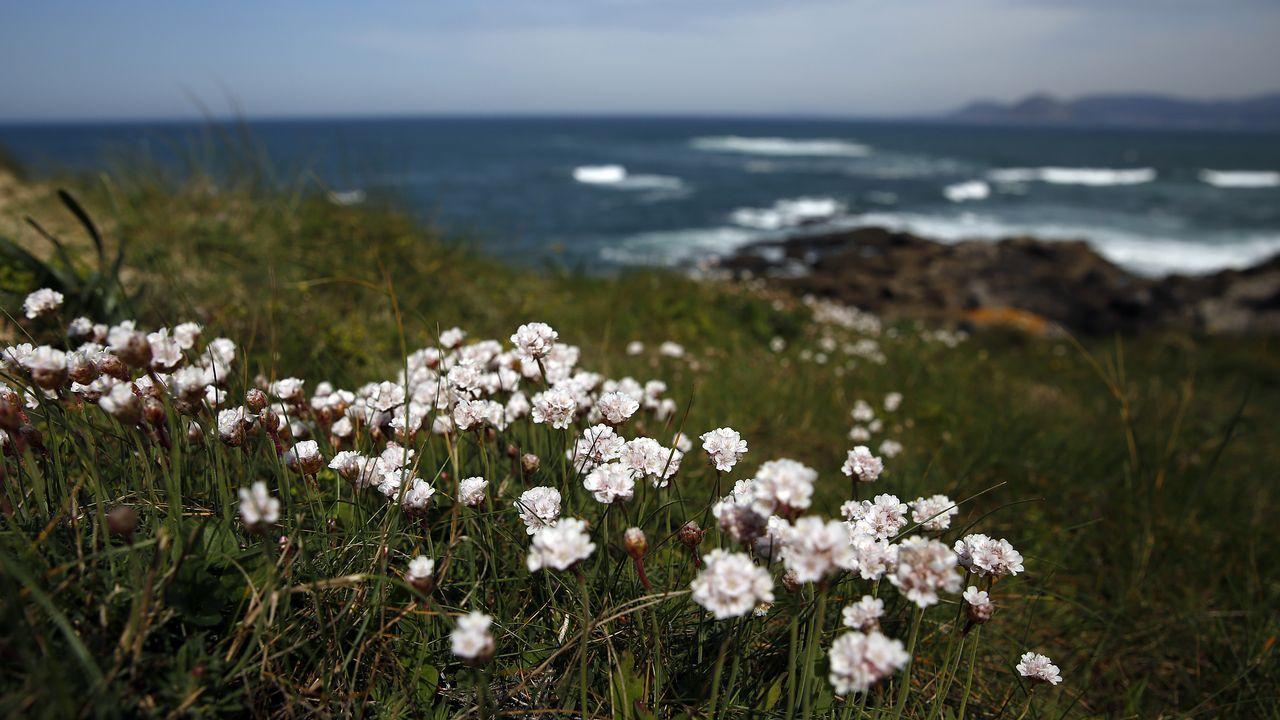 La Primavera Irrumpe En Barbanza Con Mas Virulencia Para Los Alergicos