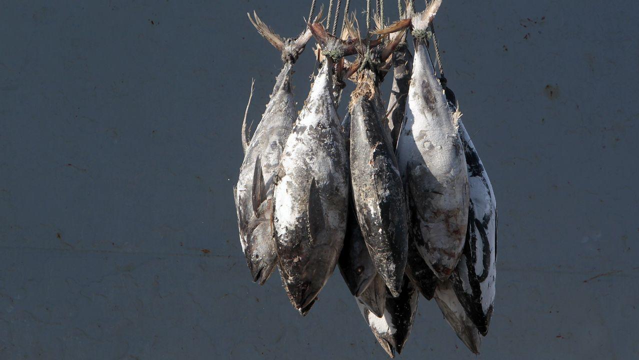 Incautadas 45 toneladas de atún congelado en A Coruña y otras tres ...