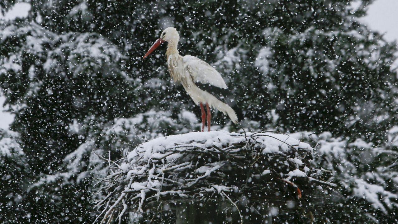 En 2018 fue varias alertas por nieve. Una de ellas tuvo lugar en febrero y dejó esta preciosa imagen de una cigüeña en Lugo.
