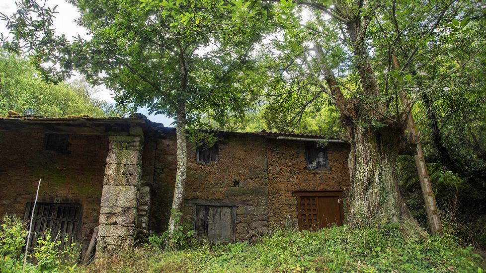 Cerca del lugar de O Souto se conserva un conjunto de antiguas bodegas y sequeiros
