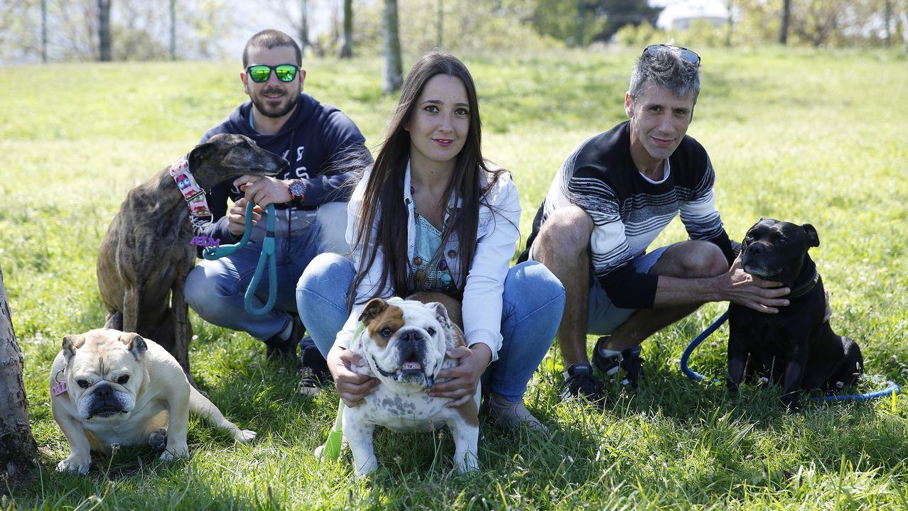 Dos gallegos impulsan una campaña para curar a perros enfermos de cáncer