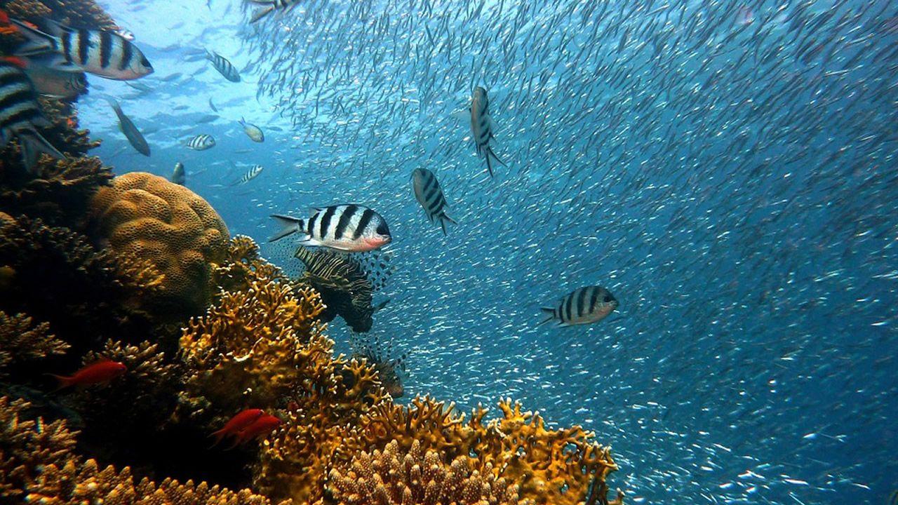 Un gallego en la Gran Barrera de Coral
