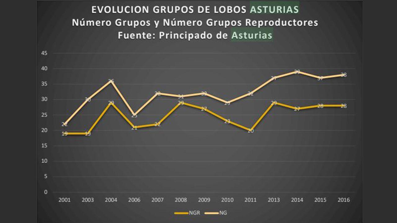 Evolución de los grupos de lobos en Asturias