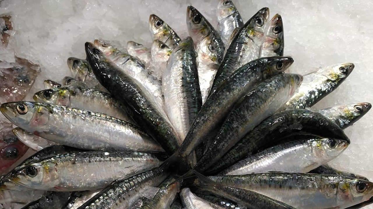 Sardina a 14,5 euros el kilo en la lonja de A Coruña.