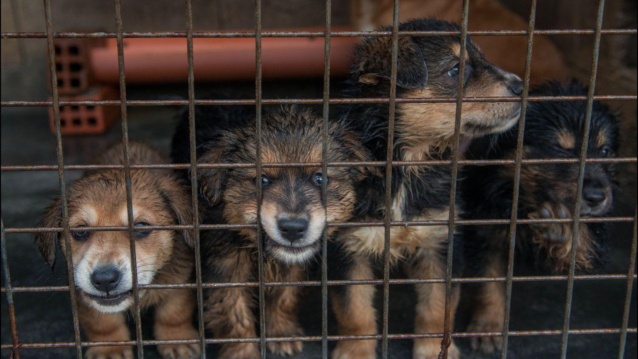 La perrera de Ourense busca salida a sus animales.