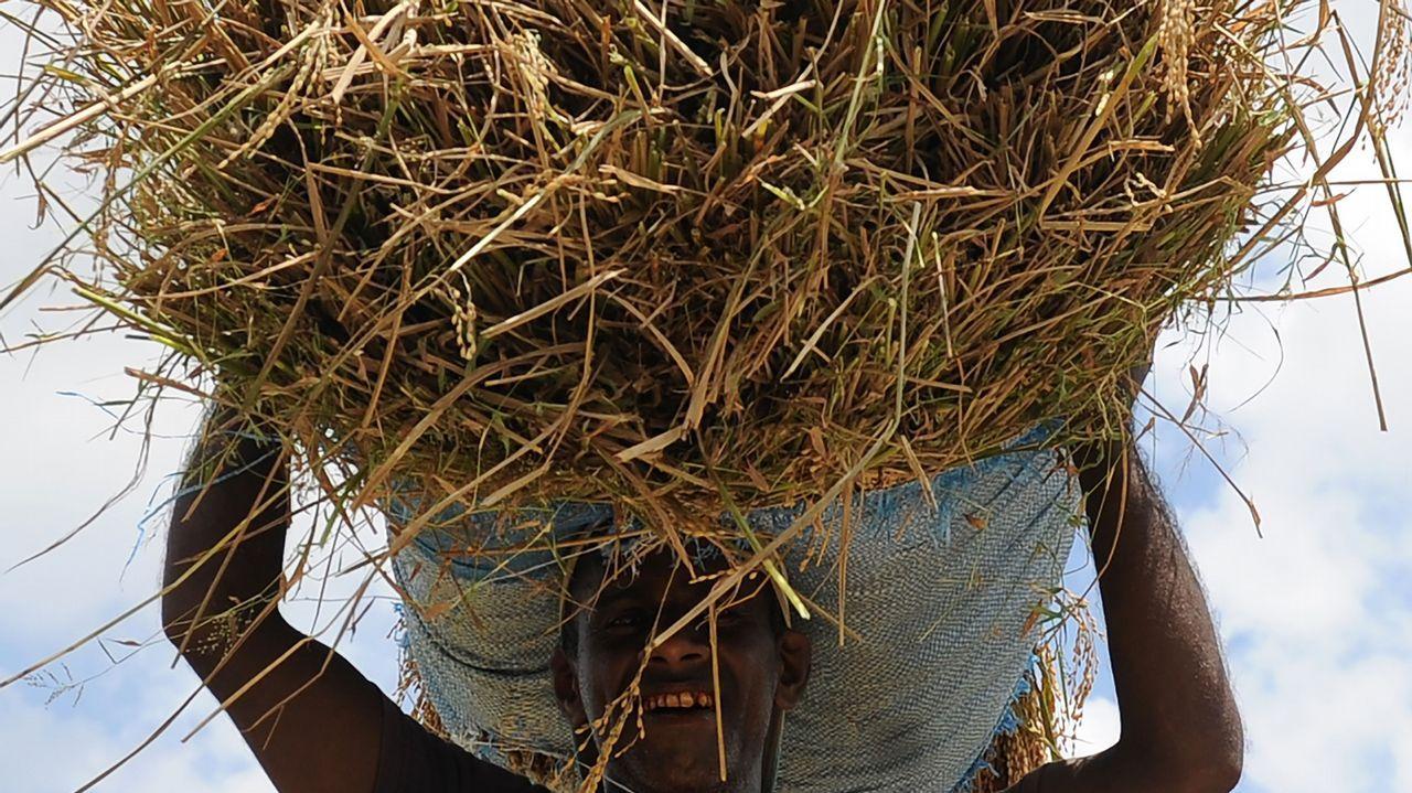Un granjero de Sri Lanka portando un gran paquete de trigo.
