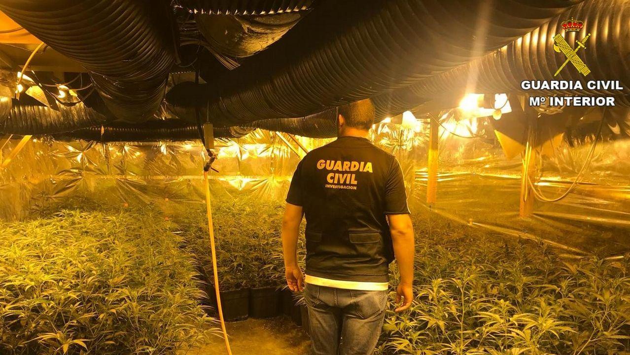 Así opera el Servicio de Bienes Decomisados al Narcotráfico.Imagen de archivo del desmantelamiento de una plantación de marihuana