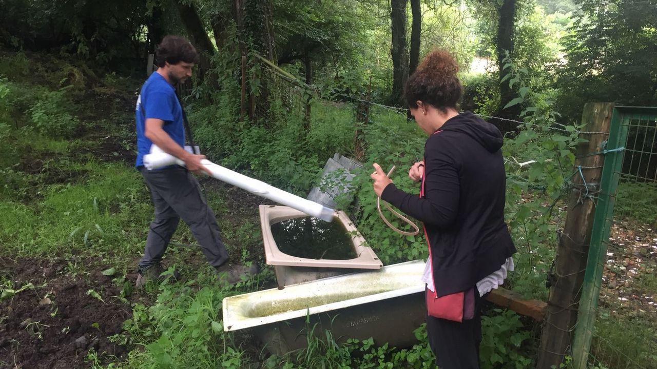 Búsqueda del mosquito asiático en Asturias
