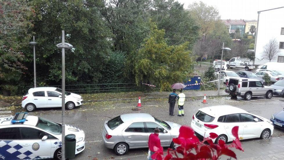 Un manto de hojas cubrió Santiago de Compostela.La ministra de Trabajo, Magdalena Valerio, esta mañana en Santiago
