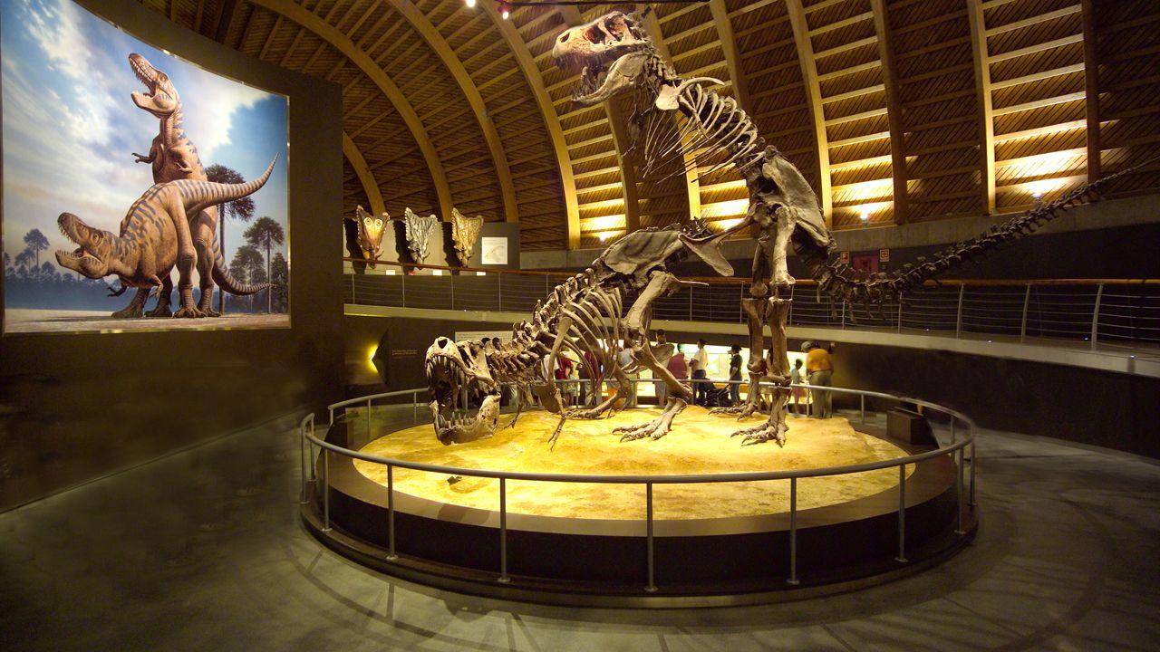 Exposicion Museo del Jurasico