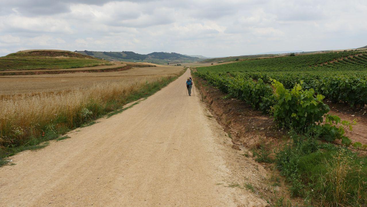 Cruzando trigales hacia Santo Domingo de la Calzada. ¿A que parece una escena de alguna película?