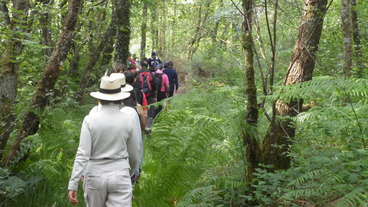 Un bosque mágico con huellas de oso.SUMMITS OF MY LIFE