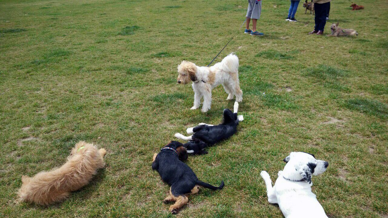Un grupo de perros en un parque de Gijón