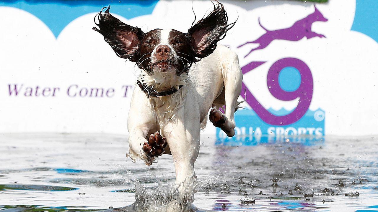 .Un perro salta en una piscina en Reino Unido