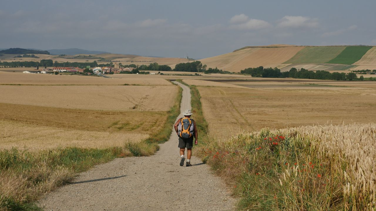 .El camino entre campos de trigo