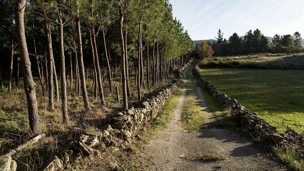 Otro trecho del antiguo camino en Lamas de Brosmos