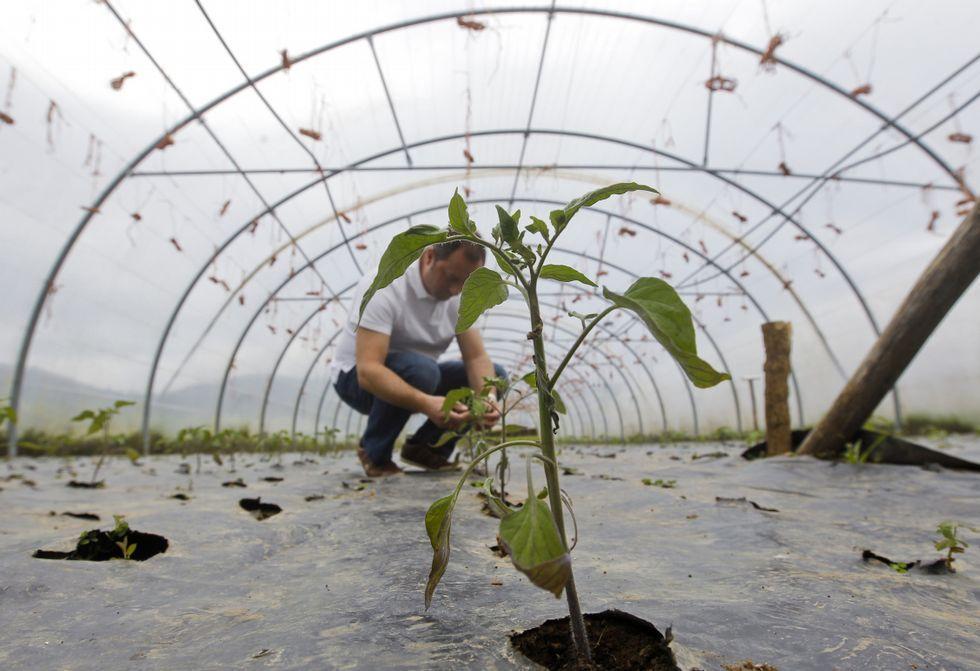 La humedad ralentiza el crecimiento de los cultivos en invernaderos, en la foto, de O Val.