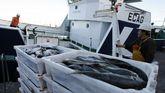 La Administración gallega pide la máxima flexibilidad para que el veto a los descartes no paralice la pesca.