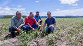 Agricultores afectados de A Limia muestran desolados los efectos de la granizada en la plantación de patatas
