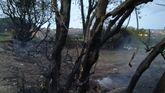 Terreno calcinado en el entorno del Ágora de A Coruña