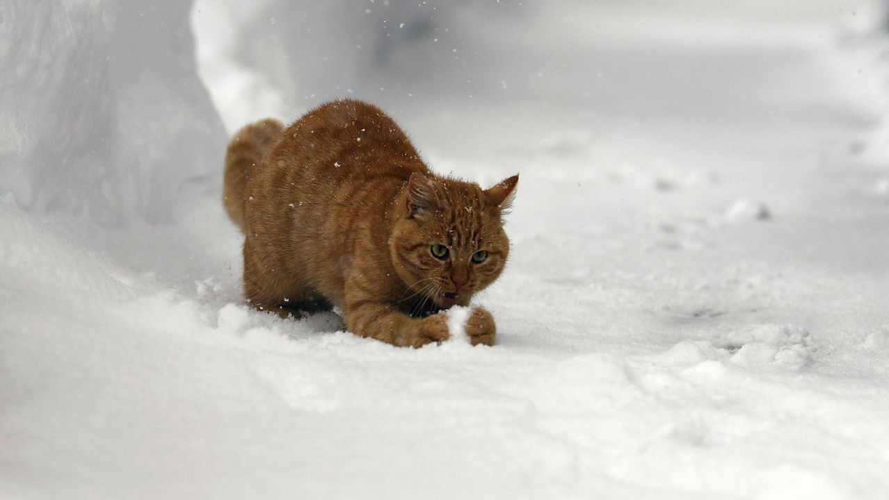 Imagen de archivo de un gato jugando en la nieve en la localidad austríaca de Ramsau am Dachstein