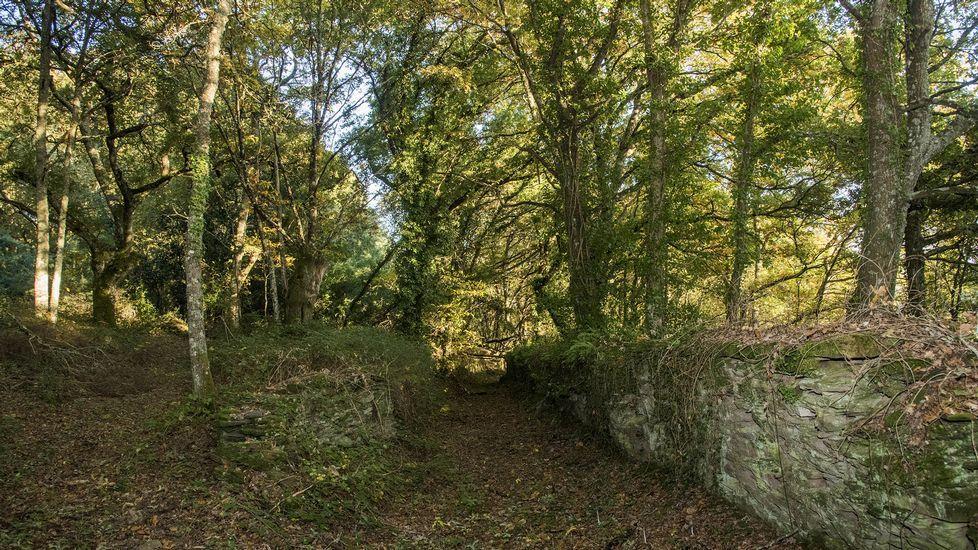 Un tramo del camino discurre por un bosque