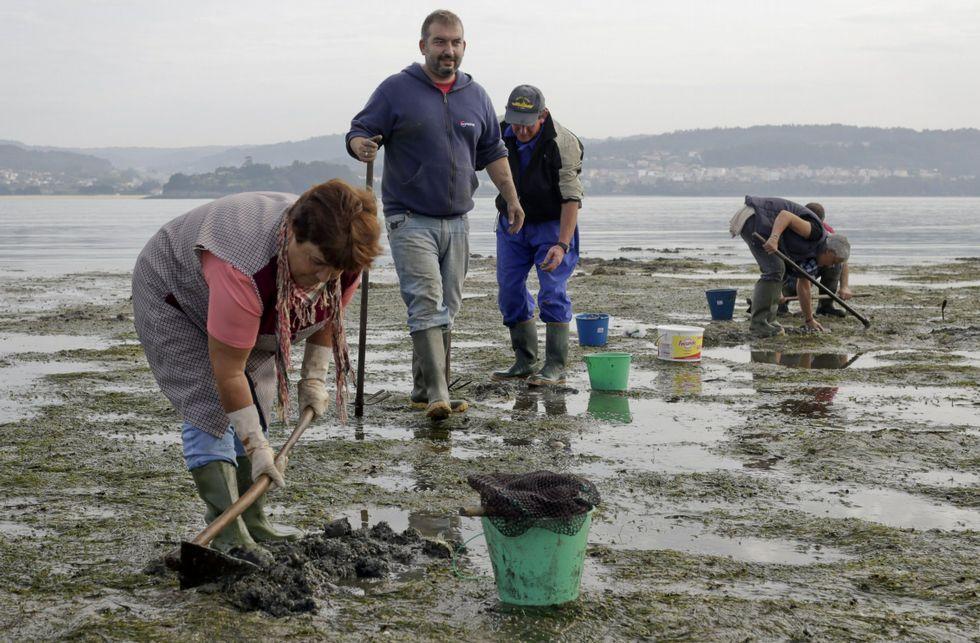 En el arenal de Sada trabajan en la actualidad nueve mariscadores.