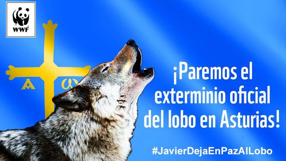 Cartel con el que se ilustra la campaña de recogida de firmas contra las batidas de lobos.Cartel con el que se ilustra la campaña de recogida de firmas contra las batidas de lobos