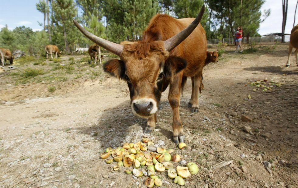 Gran parte de la producción certificada corresponde a alimentos de origen animal.