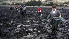 Repoblación con cría de almeja del banco marisquero de la playa de Riomaior en Santa Cristina de Cobres en Vilaboa