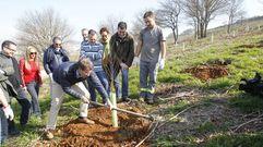 Feijoo, RománRodríguez y Agustín Hernández plantan un abedulen el Bosque de Galicia