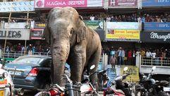 Un elefante se cuela en una localidad india causando importantes destrozos