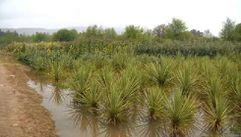Cultivos ahogados por las lluvias de primavera