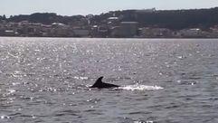 Contando delfines en las Rías Baixas
