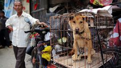 Yulin se prepara para degustar perro