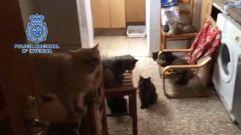 Más de medio centenar de mascotas hacinadas en una casa