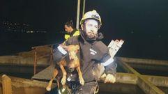 Rescatan a un perro atrapado en una tubería de riego