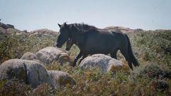 Sálvora, la isla de los caballos salvajes