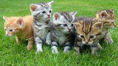 Estos gatitos son adorables