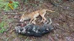 Las imágenes del maltrato animal en Ponte Caldelas