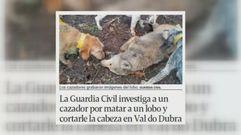 La cruel realidad del maltrato animal en Galicia