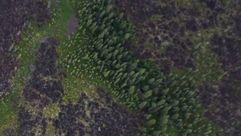 Google Earth «descubre» 467 millones de hectáreas de bosque