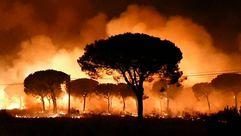 El parque de Doñana, en peligro