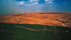 Una barrera natural para frenar al desierto