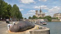 ¿Una ballena de 15 metros varada en pleno centro de París?