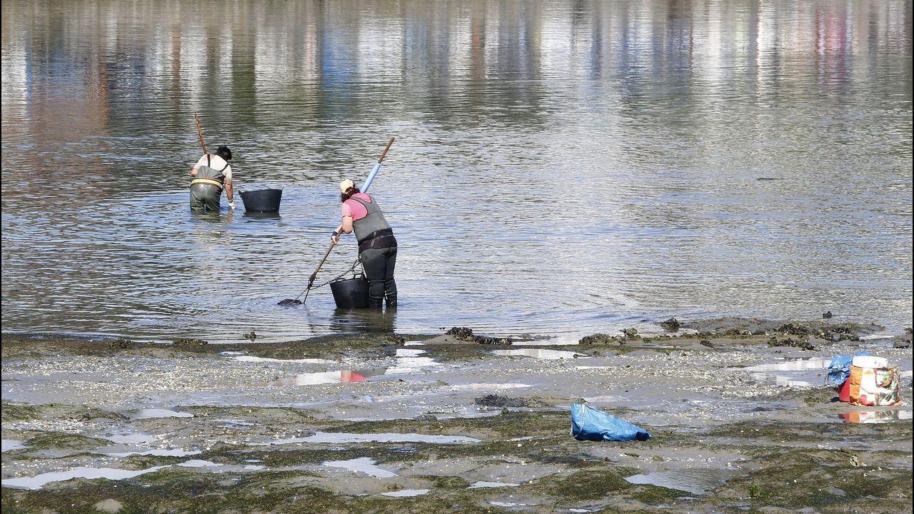 Una docena de mariscadores volvieron ayer a tomar la ría de O Burgo, a plena luz del día.